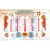 Bowel, Embryo, Spine & Iridology chart (sale)