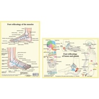 Foot Reflexology - Bones, Glands, Muscles A4