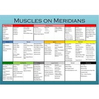 Muscles on Meridians Chart
