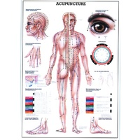 Acupuncture Wall Chart LARGE